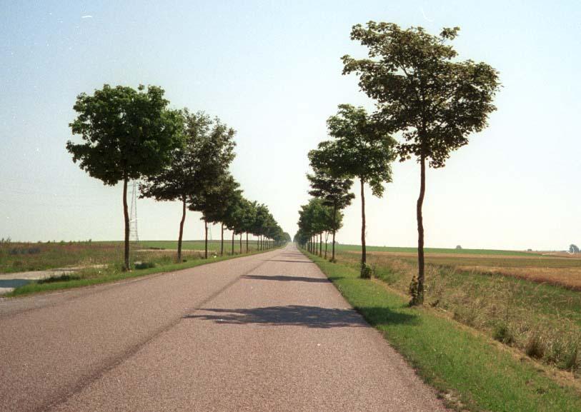Documents annexes sur l 39 expertise de l 39 infrastructure - Plantation d arbres synonyme ...